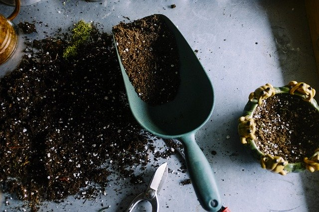 basic garden maintenance tips